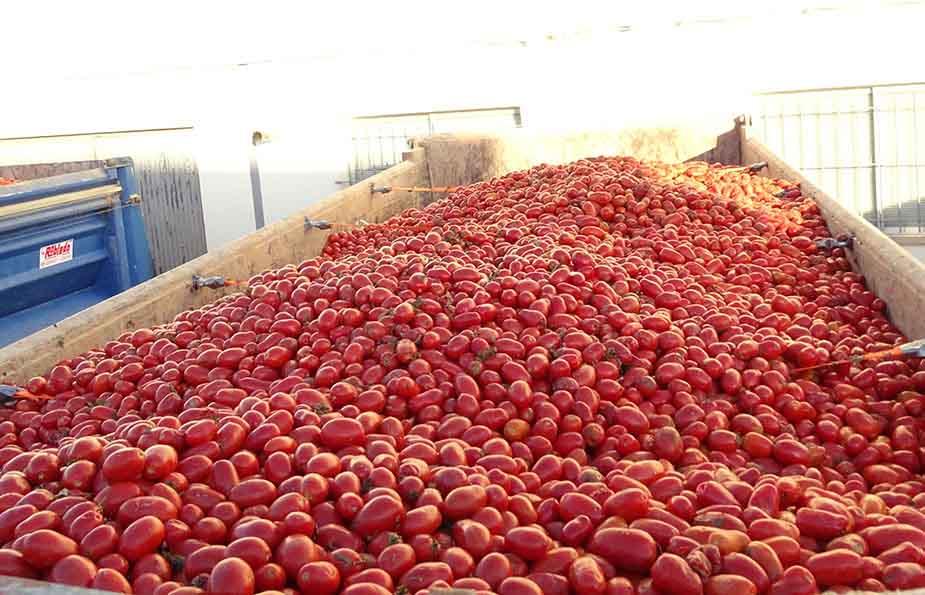 la-tomatina-3