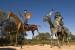 EN UN LUGAR DE LA MANCHA: sexta etapa de la ruta de Don Quijote