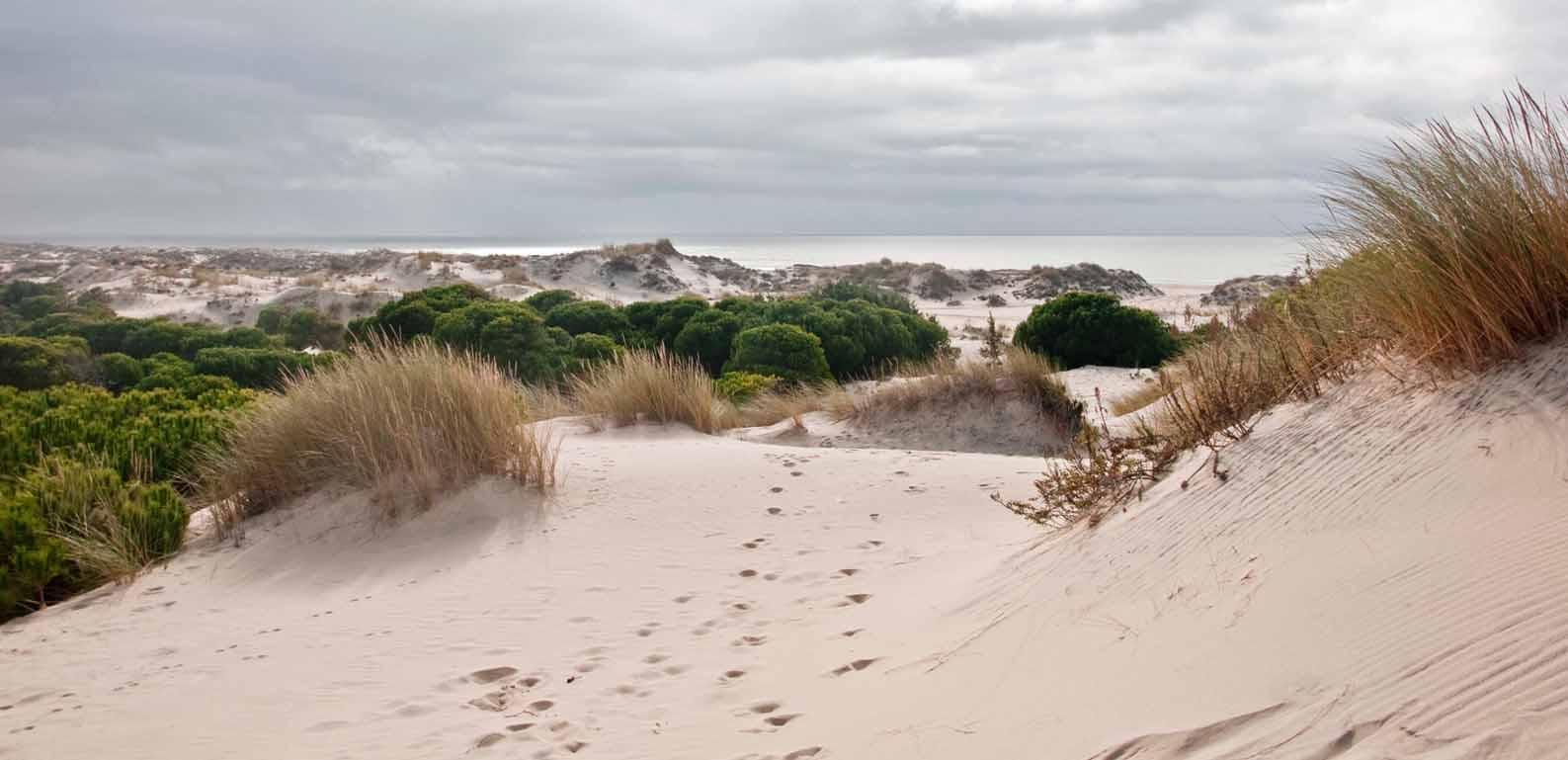 parque-natural-de-doñana-dunas-3.jpeg