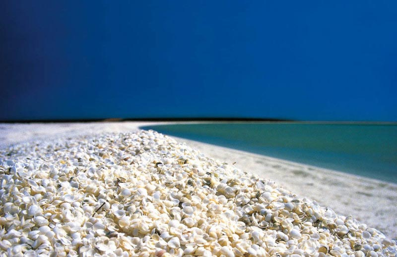 playa-de-las-conchas-conchas-colores
