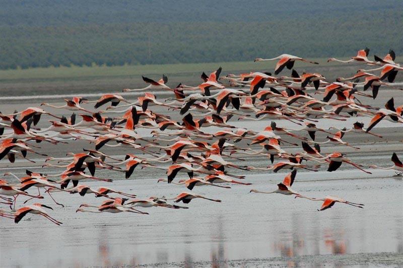laguna-rosa-flamenco