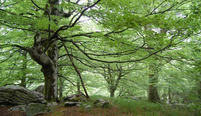 Cascada-del-Ason-bosque-2