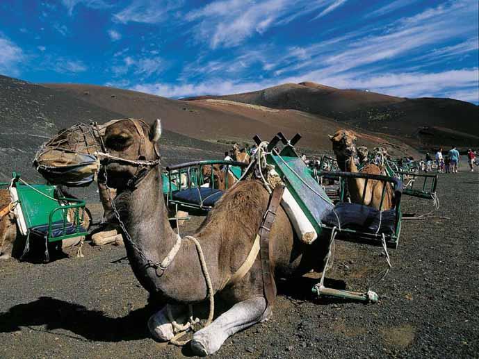 timanfaya-ruta-camellos