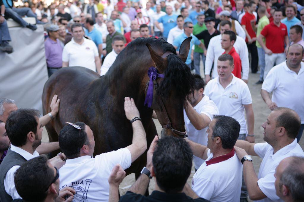 caballos-del-vino-concurso-pelo