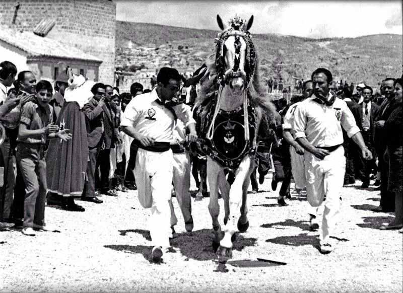 caballos-del-vino-historia