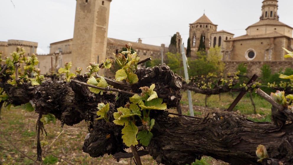 monasterio-de-poblet-viñedos