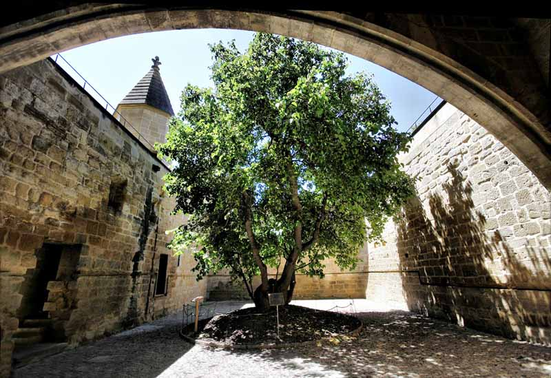 Castillo-de-Olite-la-morera-3
