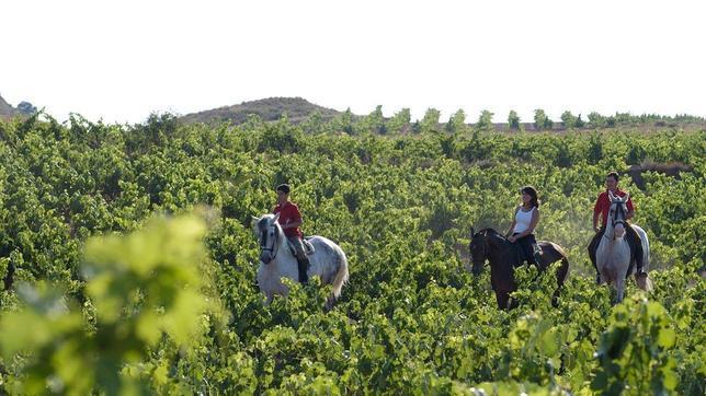finca-de-los-arandinos-caballo-2