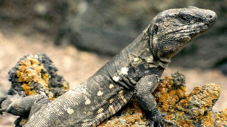 mirador-de-la-peña-lagarto-gigante